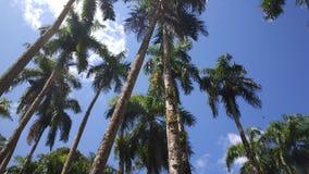 棕榈庭院 库存照片