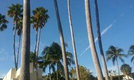 棕榈微风 图库摄影
