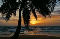 棕榈日落海滩普吉岛 库存照片