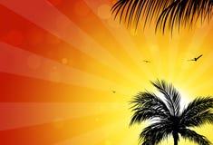 棕榈日落 免版税图库摄影