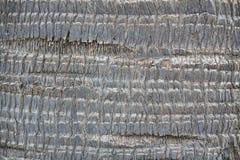 棕榈木纹理背景 免版税库存图片