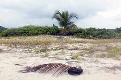 棕榈树、沙子和一棵死的棕榈树在海滩在波多黎各 免版税库存图片