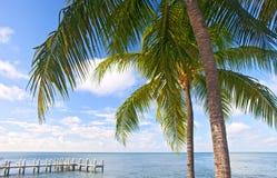 棕榈树、海洋和蓝天在一个热带海滩在佛罗里达钥匙 免版税库存照片