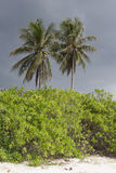 棕榈树、灌木和沙滩与多云天空 免版税库存图片
