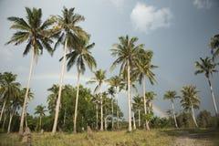 棕榈树、灌木和沙滩与多云天空 免版税库存照片
