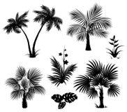 棕榈树、花和叶子,黑剪影 免版税库存图片