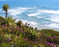 棕榈树、花和海洋海浪 库存照片
