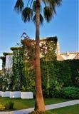 棕榈树、花和lianes在家庭旅馆,凯梅尔,土耳其里 免版税图库摄影