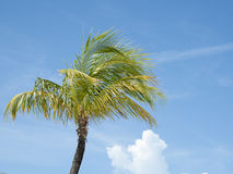 棕榈树。 免版税图库摄影