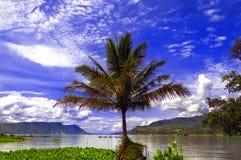 棕榈树。 库存图片