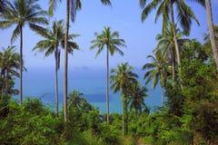 棕榈树与晴天 泰国 酸值苏梅岛海岛 免版税图库摄影