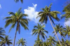 棕榈树与晴天 泰国 酸值苏梅岛海岛 免版税库存图片