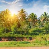 棕榈树丛和日出 库存照片