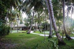 棕榈树丛在马尔代夫海岛 免版税图库摄影