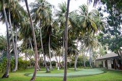 棕榈树丛在马尔代夫海岛 免版税库存图片