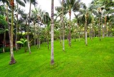 棕榈树丛在Loro公园,特内里费岛 免版税库存图片
