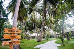 棕榈树丛,马尔代夫海岛 免版税库存图片