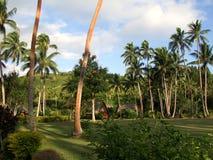 棕榈树丛 免版税库存图片