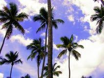 棕榈树丛 免版税库存照片