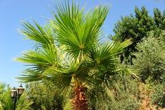 棕榈树丛 库存图片