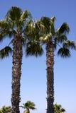 棕榈树二 图库摄影