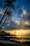 棕榈树倾斜在剧烈的日落的海洋在夏威夷 库存图片