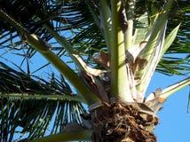棕榈树关闭 免版税库存图片
