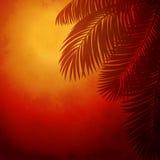 棕榈树分支在日落的 库存图片