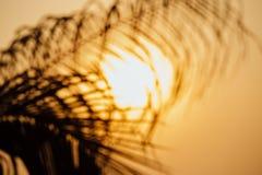 棕榈树分支在背景的太阳盘,太阳 免版税库存图片