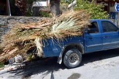 棕榈树分支  免版税库存图片