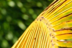 棕榈树分行 免版税库存照片
