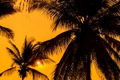 棕榈树剪影与日落的 库存图片