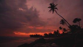 棕榈树剪影反对日落天空的在海洋在斯里兰卡靠岸2016年 影视素材