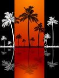 棕榈树剪影和反射在红色盘区 免版税库存照片