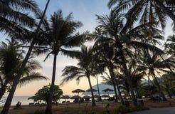 棕榈树剪影在一个海滩的在日落期间 库存照片