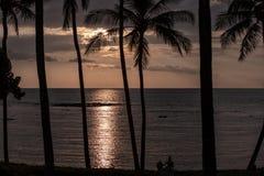 棕榈树剪影在日落的在太平洋,大岛,夏威夷 库存照片