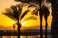 棕榈树剪影在日落的在红海 免版税库存照片