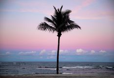 棕榈树剪影在日落的 免版税库存照片