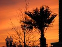 棕榈树剪影在橙色日落的 库存照片