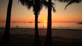 棕榈树剪影在浪漫日落背景的  酸值张 影视素材