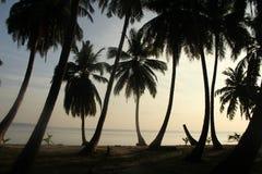 棕榈树剪影在海滩的 免版税库存图片