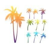 棕榈树剪影 免版税库存图片