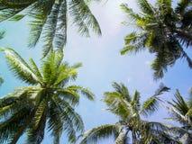 棕榈树加冠与在晴朗的天空背景的绿色叶子 浅兰的被定调子的照片 库存照片