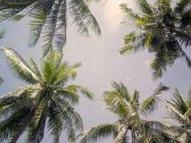 棕榈树加冠与在晴朗的天空背景的绿色叶子 温暖的桃红色被定调子的照片 库存图片