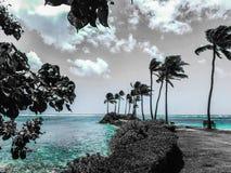 棕榈树半岛 免版税图库摄影