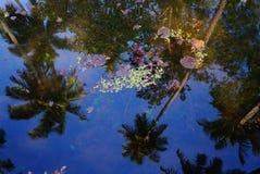 棕榈树反射在水中 免版税库存图片
