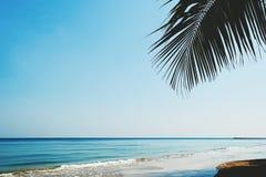 棕榈树叶子与海滩和天空的 免版税库存照片