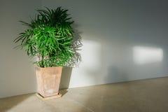 棕榈树叶子和阴影在白色墙壁上 免版税库存照片