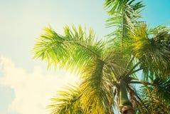 棕榈树叶子在太阳光的 减速火箭的样式 免版税库存图片