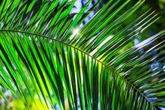 棕榈树叶子在热带 库存照片
